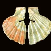 Heavy Brows, High Art?: Newly Unearthed Painted Shells Show Neandertals Were <i>Homo sapiens</i>'s Mental Equals