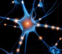 The Brain May Use Only 20 Percent of Its Memory-Forming Neurons