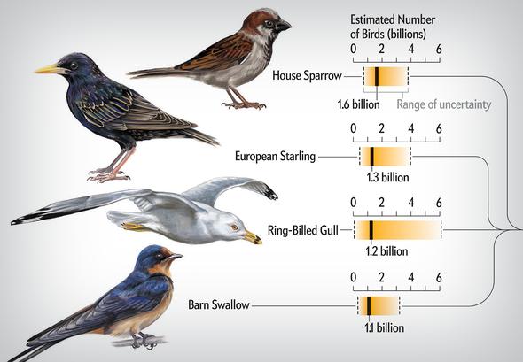 Bird Species Abundances, from Biggest to Smallest
