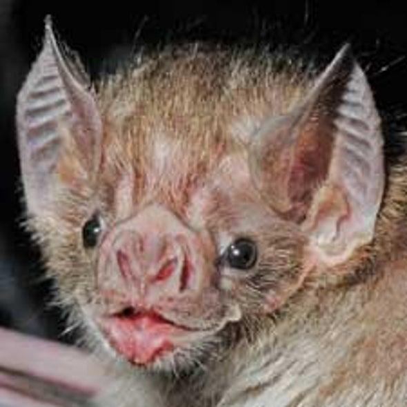 Homing In on Mammalian Echolocation