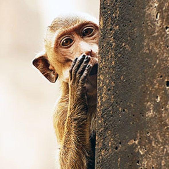 Antibody Treatment Found to Halt Deadly Ebola Virus in Primates