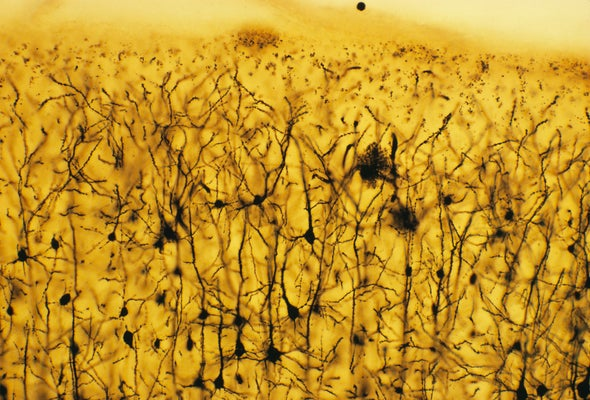 Decoding the Language of Neurons
