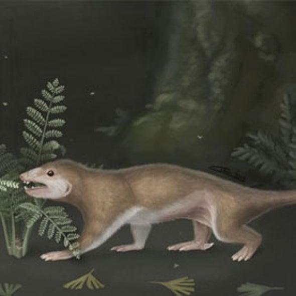 Fossils Throw Mammalian Family Tree into Disarray