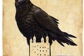 拉文马斯特·克里斯托弗·斯凯夫讲述了他与伦敦塔居民鸟类的关系。