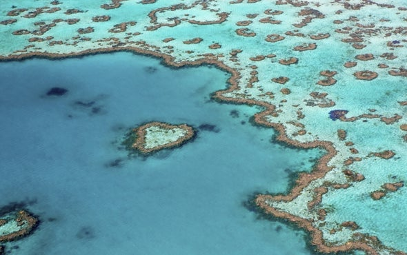 """Coral Crisis: Great Barrier Reef Bleaching Is """"The Worst We've Ever Seen"""""""