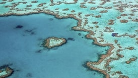 "Coral Crisis: Great Barrier Reef Bleaching Is ""The Worst We've Ever Seen"""