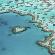 Coral Crisis: Great Barrier Reef Bleaching Is