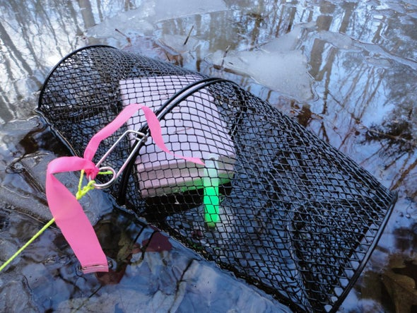 Glow Sticks Help Ecologists Study Amphibians