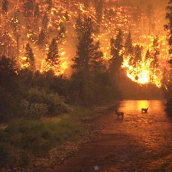 Federal Agencies Hope for a Mild Fire Season