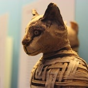 How Cats Conquered the World (and a Few Viking Ships)