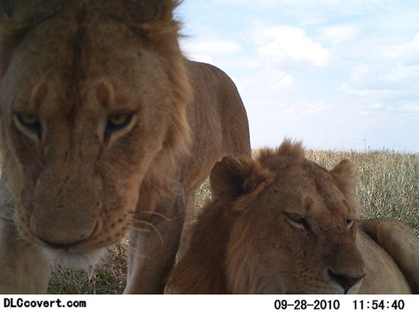 Snapshots of Serengeti Wildlife Let Citizen Scientists Shine [Slide Show]