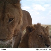 Snapshots of Serengeti Wildlife Let Citizen Scientists Shine [Slide Show]