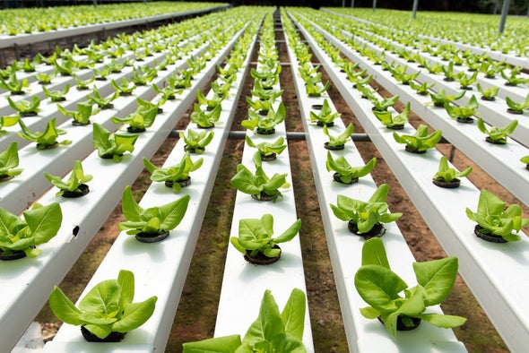 Are Hydroponic Vegetables Less Nutritious?