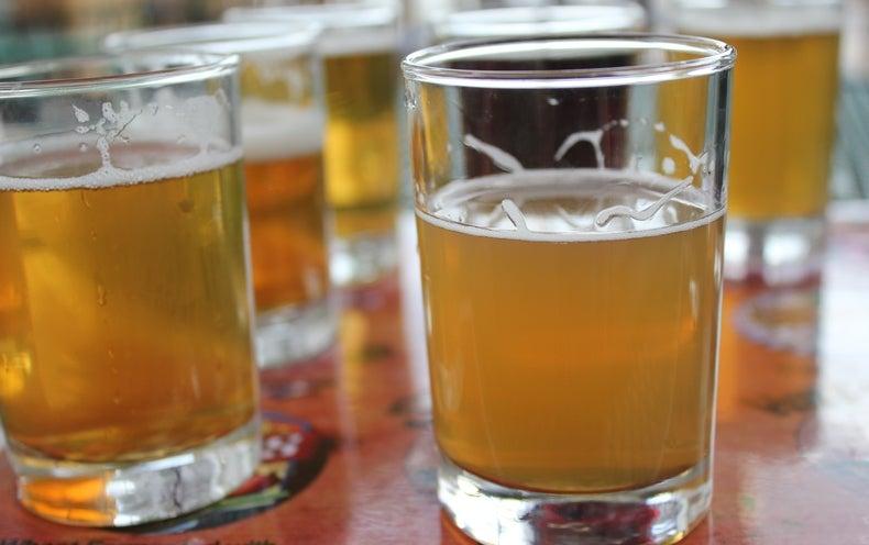 Ale Genomics: How Humans Tamed Beer Yeast
