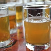 Ale Genomics: How Humans Tamed Beer Yeast