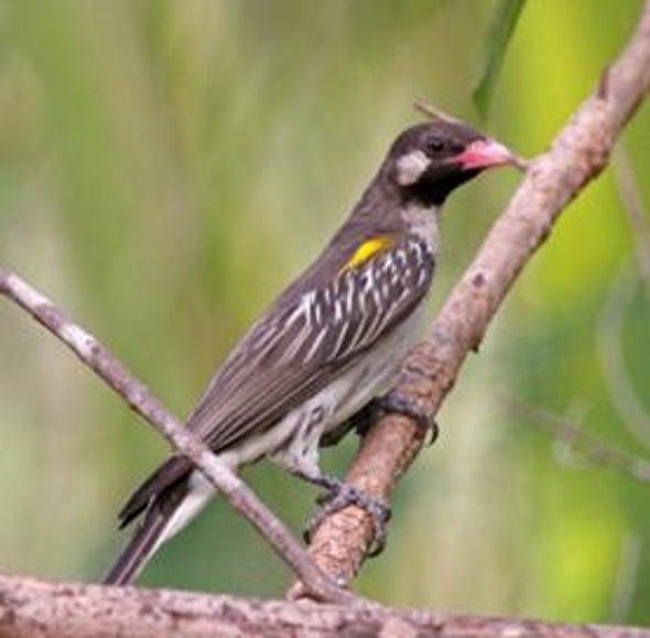 Birds of Burden: 7 Ways Humans Harness Avian Abilities [Slide Show]