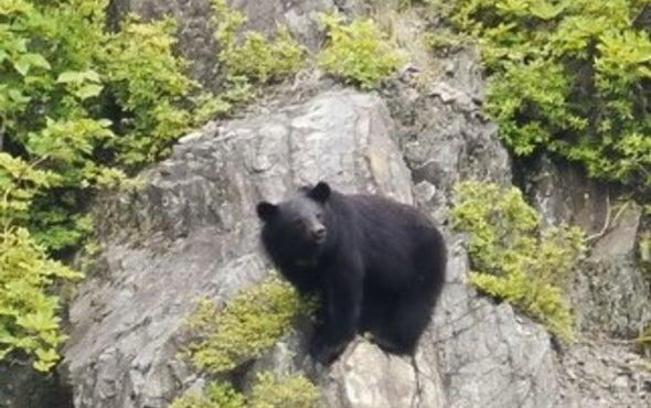 Climbing Bears Help Plants Keep Cool