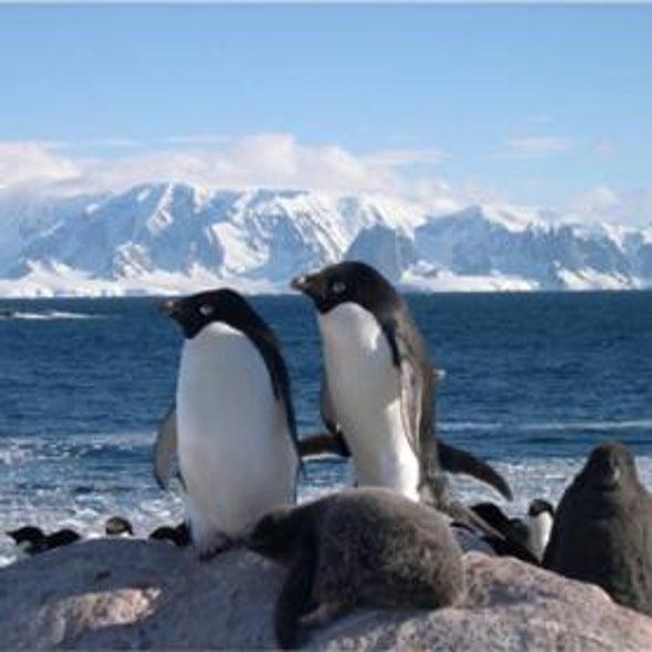 Heat Exhaustion: Has the Adelie Penguin Met Its Match?