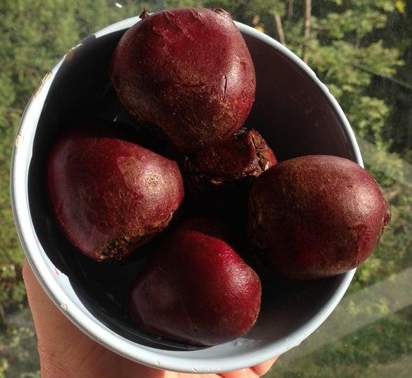Beet Juice Could Help Body Beat Altitude