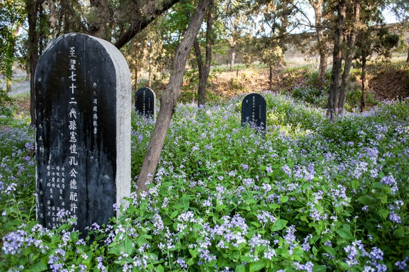 Graveyards Are Surprising Hotspots for Biodiversity