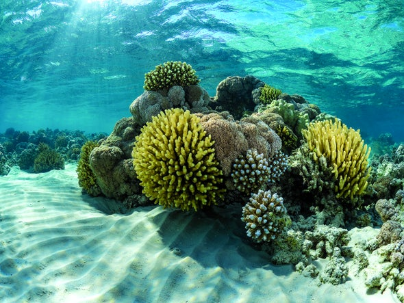 Will Probiotics Save Corals or Harm Them?