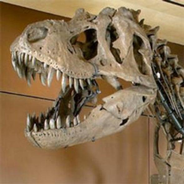 Dino Deals: Prehistoric Fossils for Sale on the Vegas Strip [Slide Show]