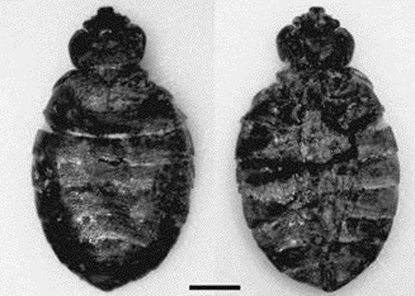 Cave Dwellers Battled Bed Bug Bites, Too