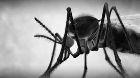 Buzz Kill: Our Best Weapons against Mosquitoes
