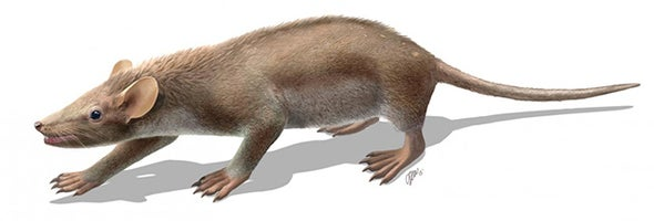 'Cute Furball' Is Best-Preserved Mammal from Dinosaur Age