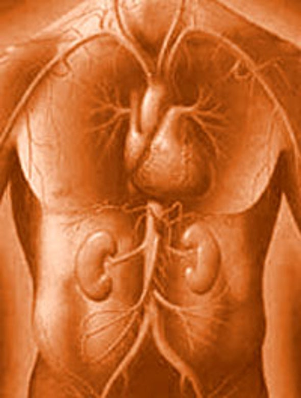 Nanotech for New Organs