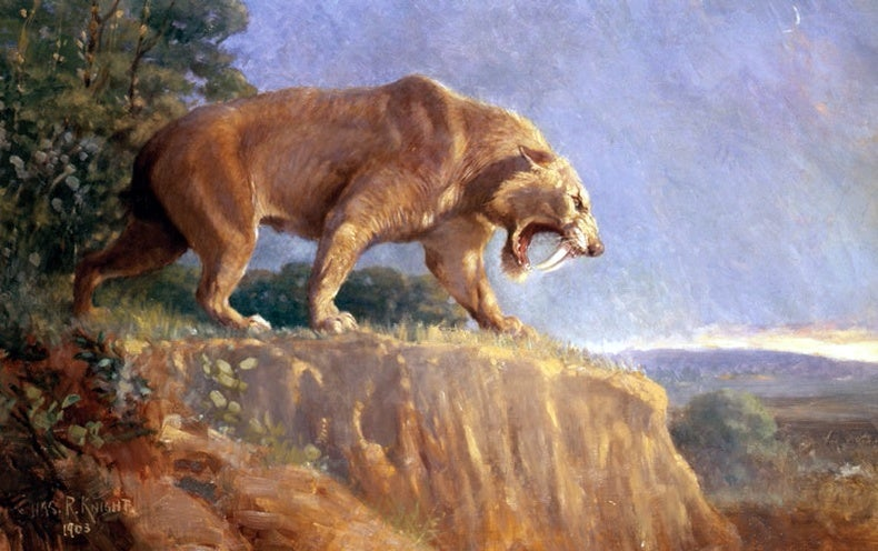 Saber-Toothed Cats May Have Roared Like Lions - Scientific