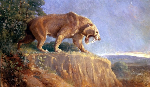 Saber-Toothed Cats May Have Roared Like Lions