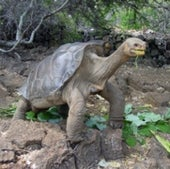 Lonesome George: