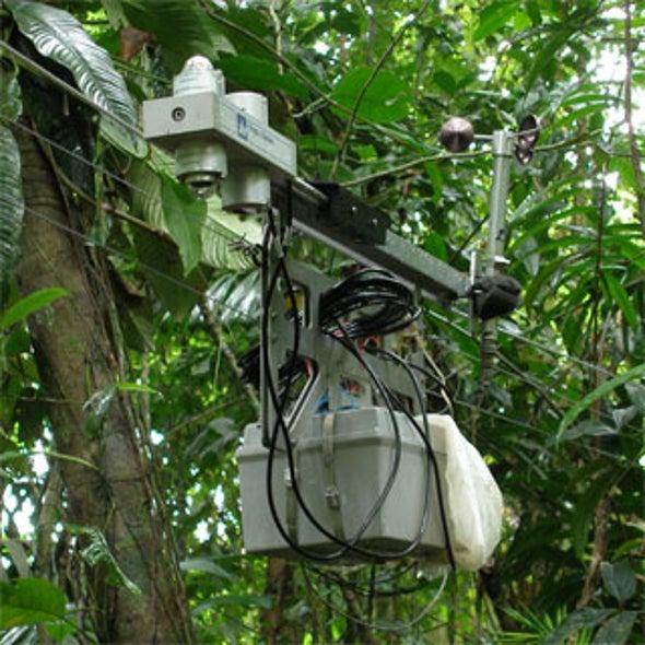 Rainforest Climate Change Sensor Station Goes Wi-Fi
