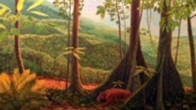 Fossil Flora Suggest Rain Forest Once Flourished Where Colorado Now Burns
