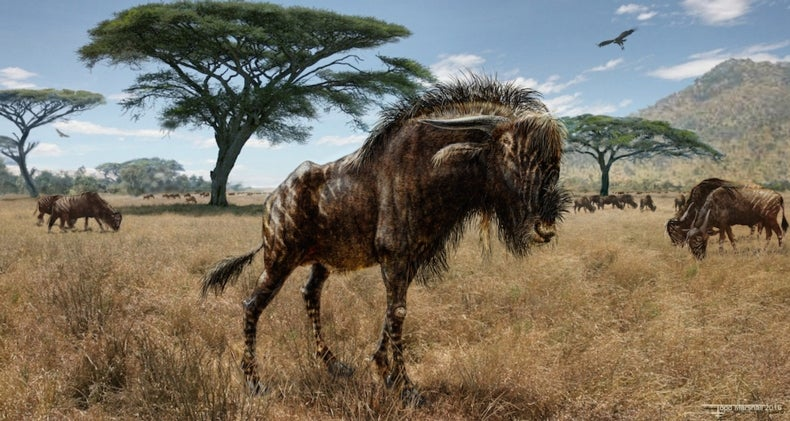Weird Ancient Wildebeest Sported Duck-Billed Dinosaur Nose