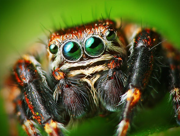 A Mechanical Sensor Inspired by Spider Biology [Video]