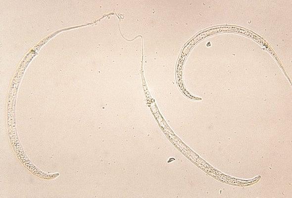 Dogs Thwart Effort to Eradicate Guinea Worm