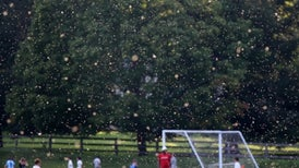 Only 10 Midges Needed to Make a Swarm