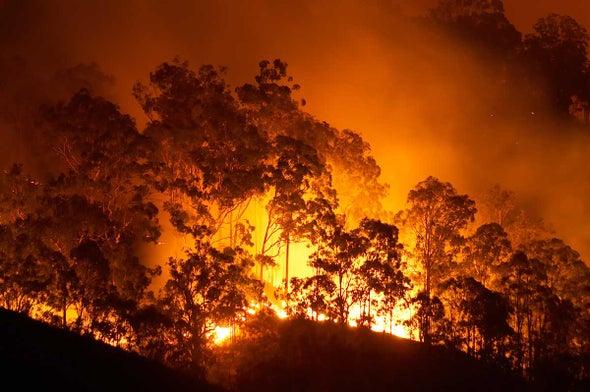 El Niño Could Ignite Amazon, Drench California