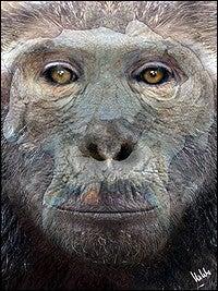 Fossil Sheds Light on Great Ape Ancestry