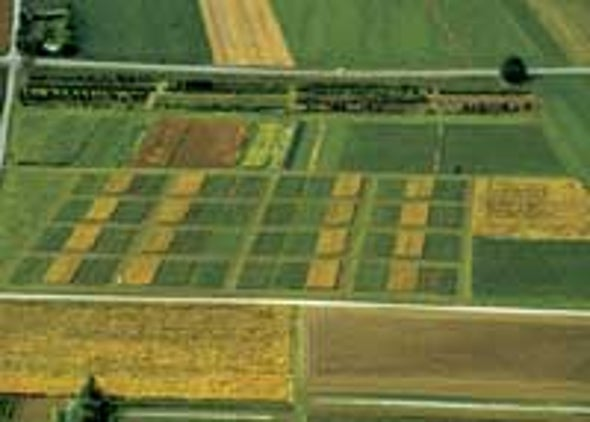 Organic Farms More Fertile, Study Finds