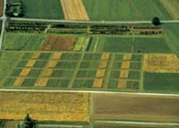 Organic Farms More Fertile, Study Finds