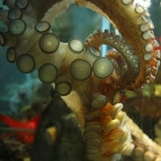 Are octopuses smart?