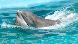 Dolphins' Watertight Sex Involves a Strange Twist
