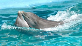 Dolphins' Watertight Sex Involves a Strange Twist