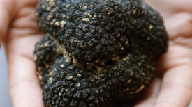 The Hidden Life of Truffles
