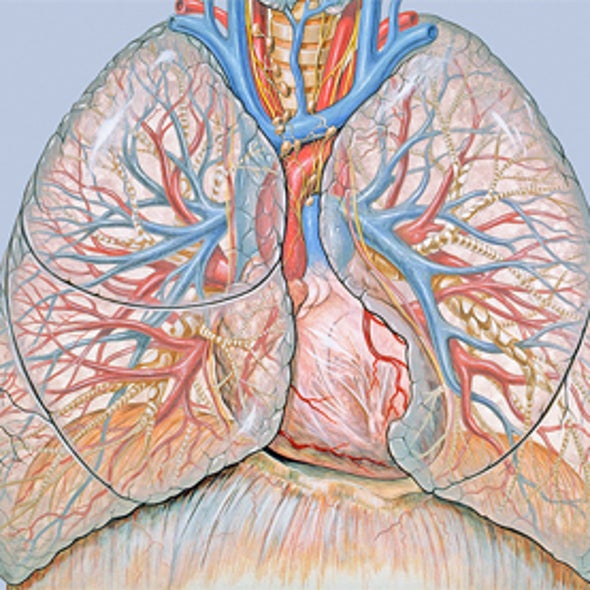 Trio of Genome-Sequencing Studies Offers a Broader View of Lung Cancer
