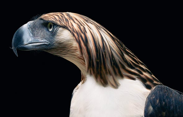 Portraits of Endangered Animals