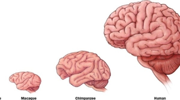 explain the role in the brain and cognitive functions Cognitive function is a person's ability to what is cognitive function dementia and other cognitive disorders alter how the brain handles and stores.